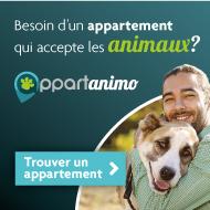 sauvetage bulldog français